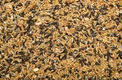 Birdseed Stock Image