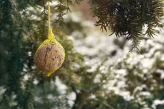 Birdseed hanging from a branch Stock Photos