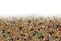 Birdseed wallpaper Royalty Free Stock Photo