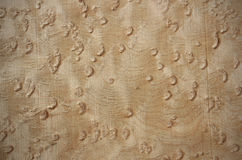 Birdseye maple - veneer wood surface Royalty Free Stock Image