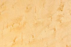 Birdseye Maple Wood Texture Royalty Free Stock Photos