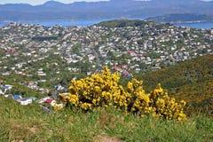 Birdseye sikt av Wellington City, Nya Zeeland Arkivbilder