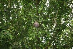 Birdsnest σε έναν ζωολογικό κήπο Στοκ εικόνα με δικαίωμα ελεύθερης χρήσης
