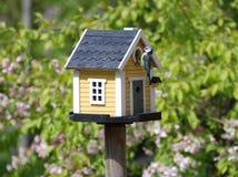 Birdsnest. A birdsnest with a bird feeding his nestlings in the nesting box royalty free stock photography