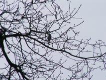 Birdsong Stock Photos