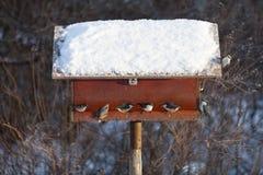 Birdtable Royalty Free Stock Photo