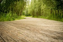 Wooden hiking path in the park Stock Photography