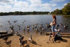 Birdwatcher con il cannocchiale su un puntello del lago Fotografie Stock