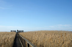 Birdwatcher at a platform. In the reeds at the swedish island Oland Stock Photos