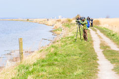 Birdwatchers. Bejershamn, Sweden - April 25, 2015: Unknown birdwatcher looking after migratory birds in wetland as they arrive in early spring. Bejershamn is a Royalty Free Stock Image