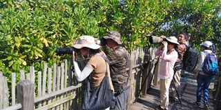 Birdwatching in Kranji marshes royalty free stock photo