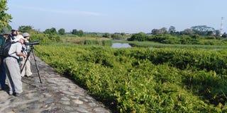 Birdwatching in Kranji marshes, Singapore royalty free stock photo