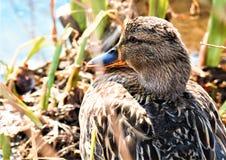 Birdwatching no parque fotografia de stock royalty free