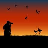 Birdwatching no por do sol ilustração royalty free