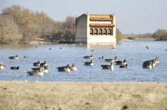 Birdwatching observatory. View of a lagoon with different aquatic birds and one birdwatching observatory, Spain Stock Image