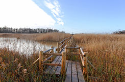 Birdwatching path. Birdwatching path in a lake Stock Image