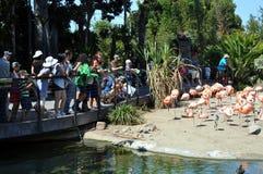 Birdwatching at San Diego zoo. San Diego zoo (USA), August 2013 - Tourists watching beautiful and elegant flamingos at San Diego zoo Royalty Free Stock Photos