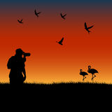 Birdwatching at sunset. Vector illustration of man doing birdwatching in a field at sunset Royalty Free Stock Photos