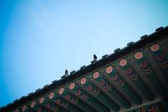 Birdy на крыше Стоковые Фото