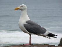Birdy Zdjęcie Stock
