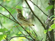 birdy Royaltyfria Bilder
