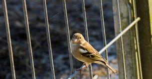 Birdy 免版税图库摄影