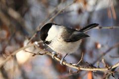 Birdy Stockbilder