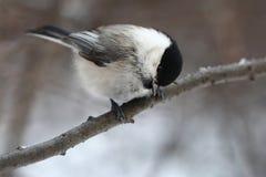 Birdy Lizenzfreies Stockfoto