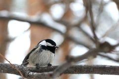 Birdy royalty-vrije stock afbeeldingen