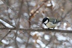 Birdy 图库摄影