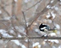 Birdy 免版税库存图片