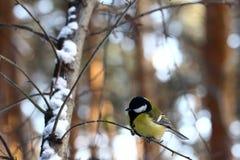 Birdy Fotografia Stock