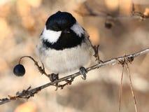 Birdy Fotos de archivo