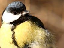 Birdy Photographie stock