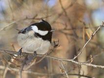 Birdy Imágenes de archivo libres de regalías