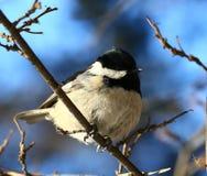 Birdy Foto de archivo libre de regalías