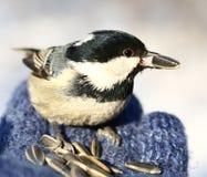 Birdy Royaltyfri Foto