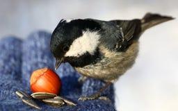 Birdy Fotografering för Bildbyråer