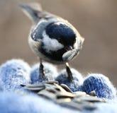 Birdy Стоковое Изображение