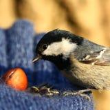 Birdy Стоковые Изображения RF