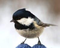Birdy Стоковая Фотография RF