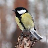 Birdy Stock Image