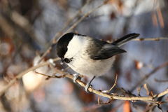 Birdy Stock Images