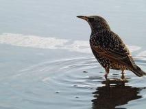 Birdy. Having a paddle Stock Photos