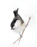 birdy liten snow Arkivfoton