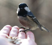 Birdy Royalty Free Stock Photos