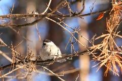 Birdy Stock Photos