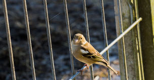 Birdy Royalty Free Stock Photography
