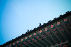 Birdy på taket Arkivfoton