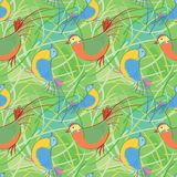 Birdy pattern  Royalty Free Stock Photo